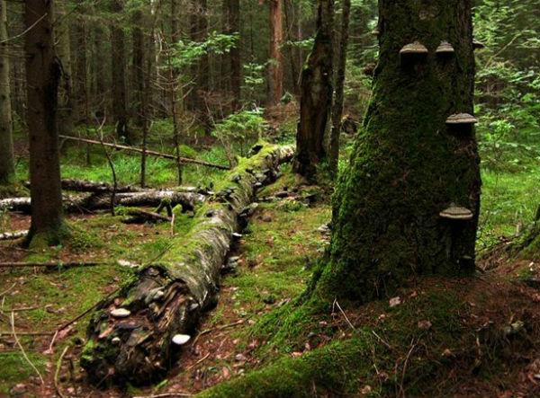Тайны абсолютно черного леса