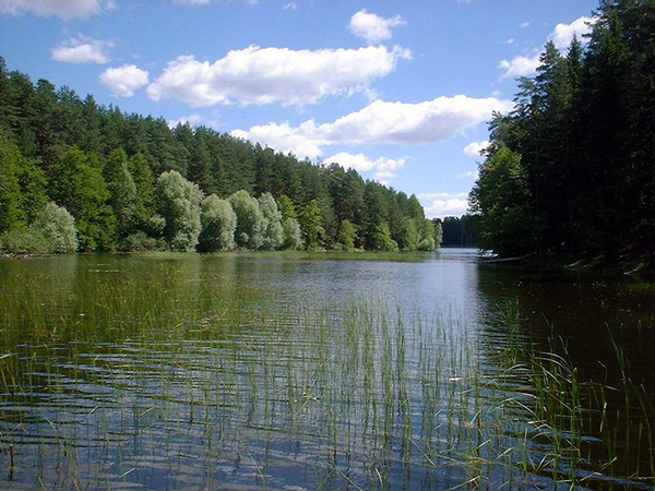 яльчик озеро марий эл фото