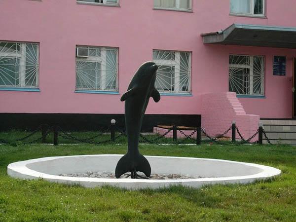 колония черный дельфин фото